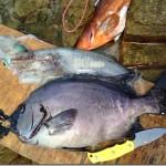 【まとめ】7月の魚突き