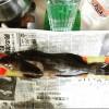 エントリーNo.002 リクガメ様 【ジャックナイフダービー2015】